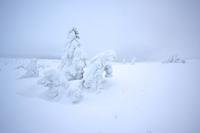 Bílá mlha amráz