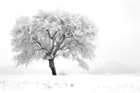 Zmrzlý strom