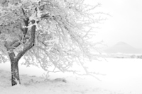 Zmrzlý strom II.