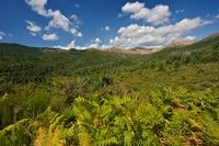 Zelená Korsika