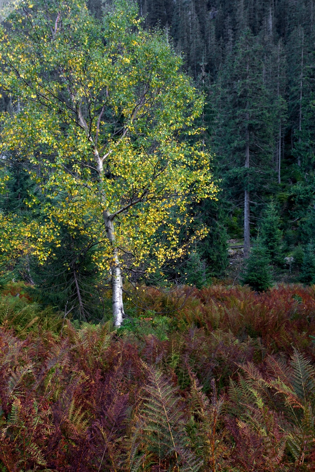 Podzim vLabském dole
