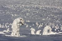 Zmrzlí trpaslíci