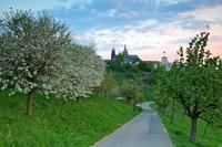 Jarní ráno na Petříně