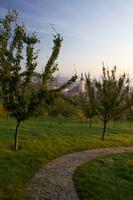 Svítání na Petříně