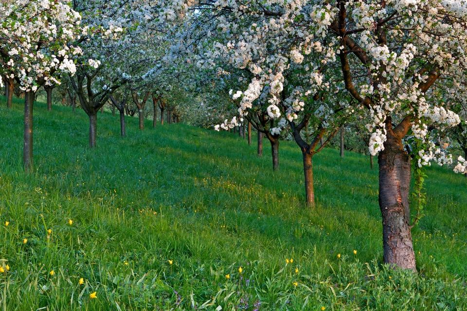 Jaro vSeminářské zahradě