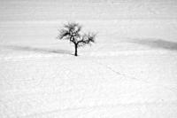 Valašský samotář